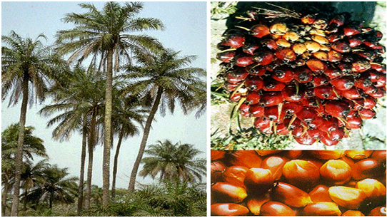 Palm oil industry in Africa