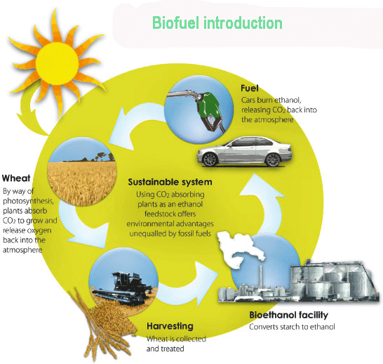 an overview of renewable fuel biofuels and the issues of pollution on our ecosystem Total renewable fuels advanced biofuels cellulosic series of attendant social and environmental problems connected to palm pollution, soil loss, ecosystem.