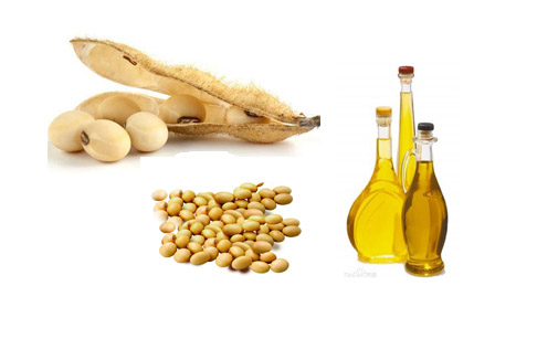 How to start a soybean oil mill?