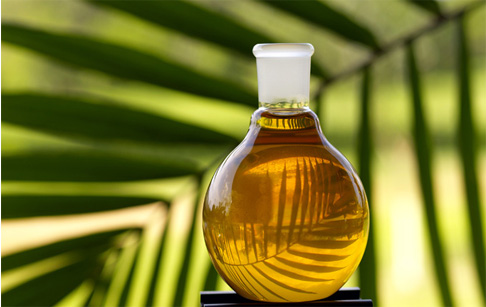 What's the application of palm oil and palm kernel oil?