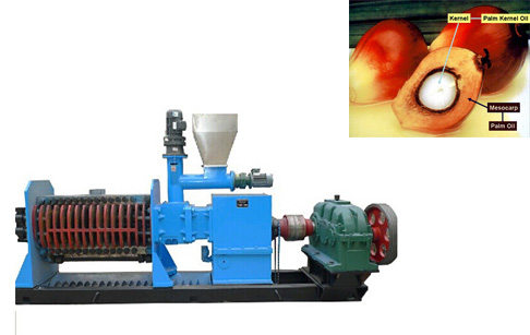 What is palm kernel expeller?