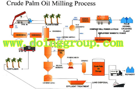 Palm oil processing line introduction briefly
