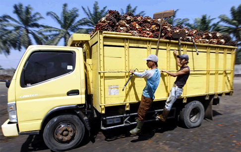 Palm oil to biodiesel