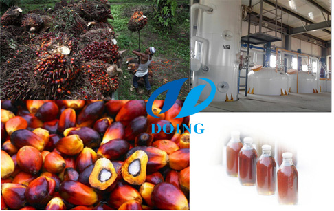 Crude palm oil specifications