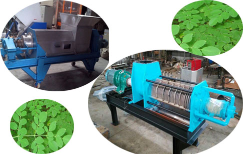 Screw squeezer machine for moringa leaf
