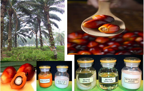 How palm oil extracting machine works ?