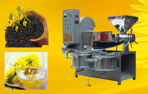 Canola oil cold press machine