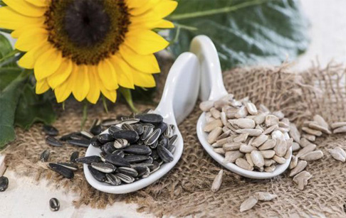 How is oil extracted from sunflower seeds?