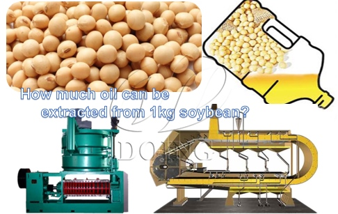 How much oil can be extracted from 1kg soybean?