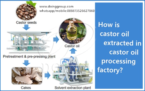 How is castor oil extracted in castor oil processing factory?